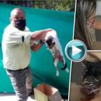 Video: Conductor de Metrolínea salvó a un gato atropellado en plena autopista a Floridablanca