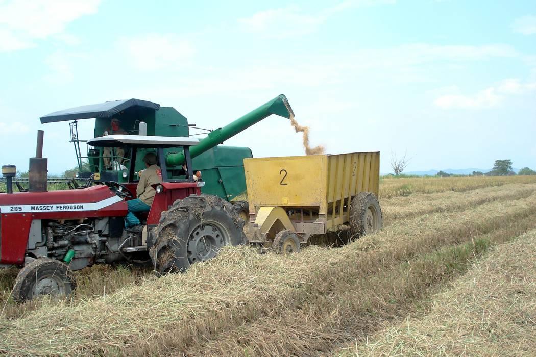 El Minagricultura autorizaría importaciones de maíz y arroz