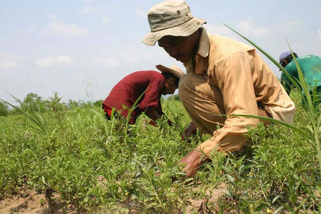 Minagricultura se fija en temas agrícolas de la zona