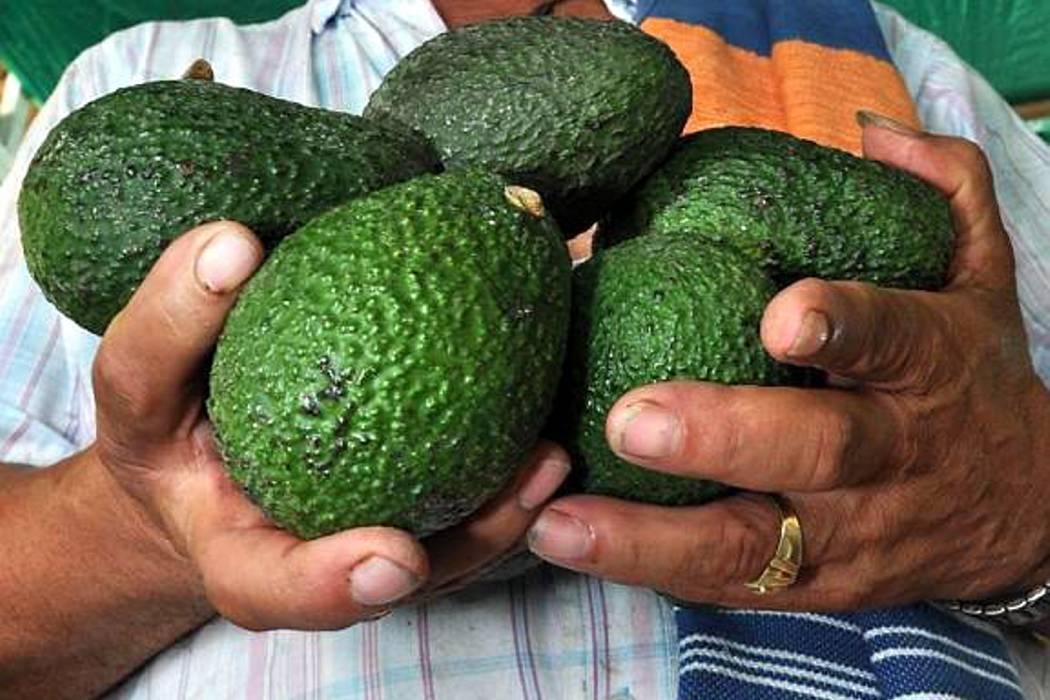 Al país llegan 12 millones de toneladas de alimentos mensuales: Minagricultura