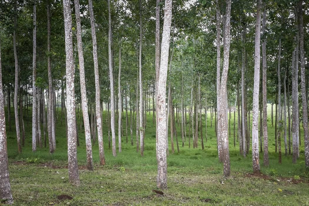 Minagricultura alerta sobre posibles estafas con proyectos forestales