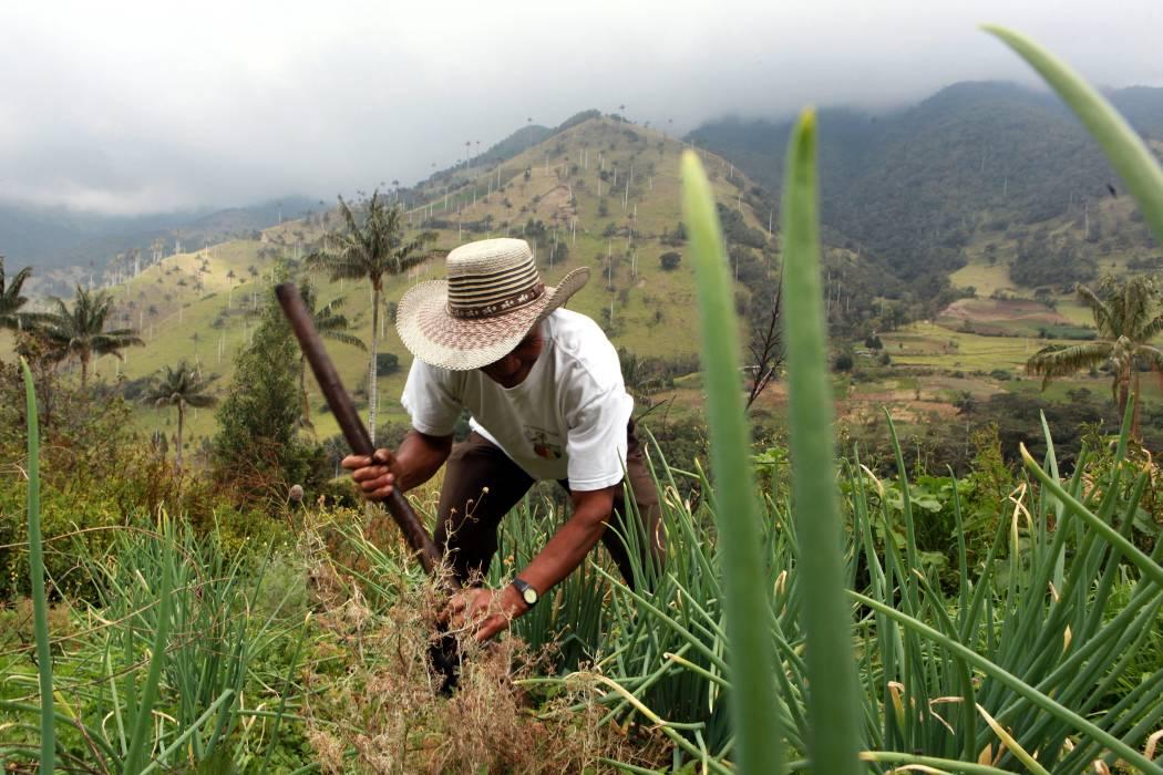 Urge  implementar el Decreto de Ley de Tierras: Minagricultura