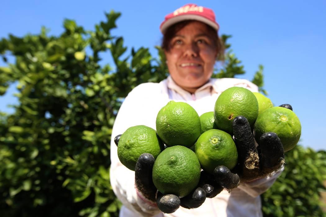 Agro del país tiene mucho para crecer: Minagricultura