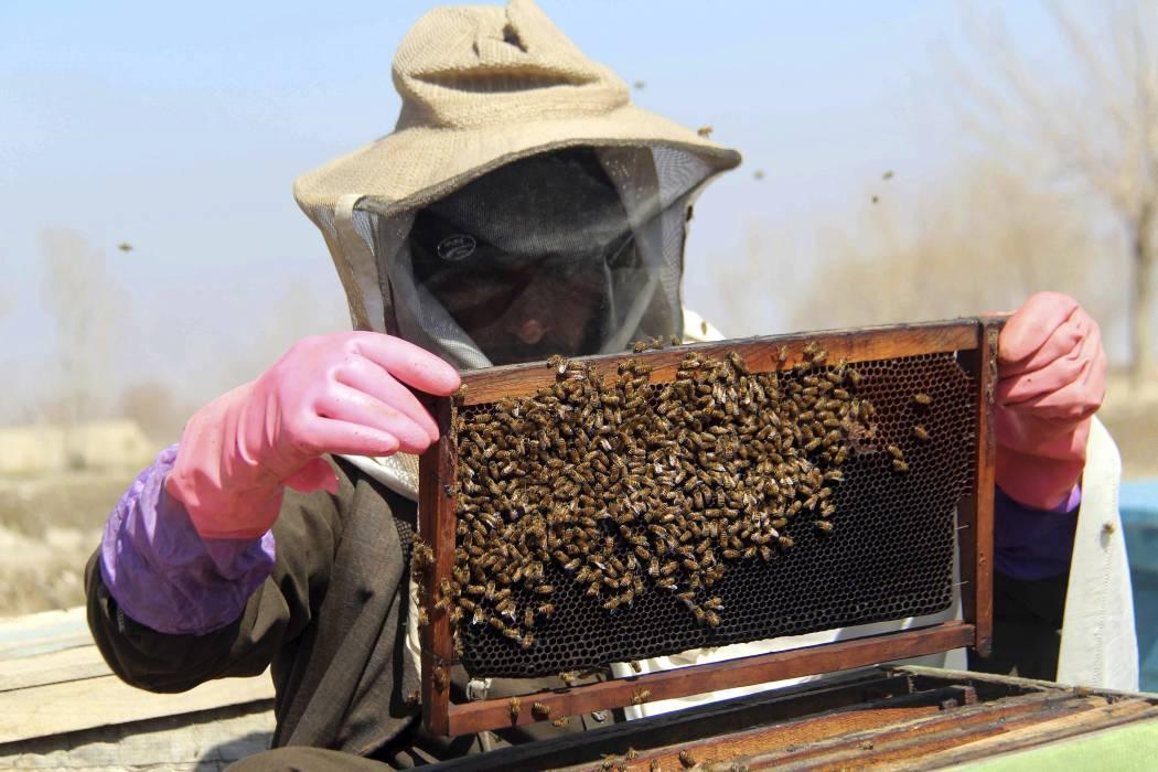 Minagricultura promueve proyecto de ley Apícola