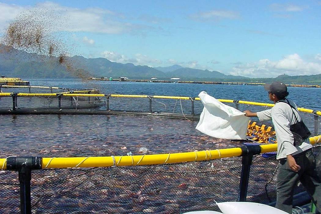 En días santos se consumirían 13.000 toneladas de pescado: Minagricultura