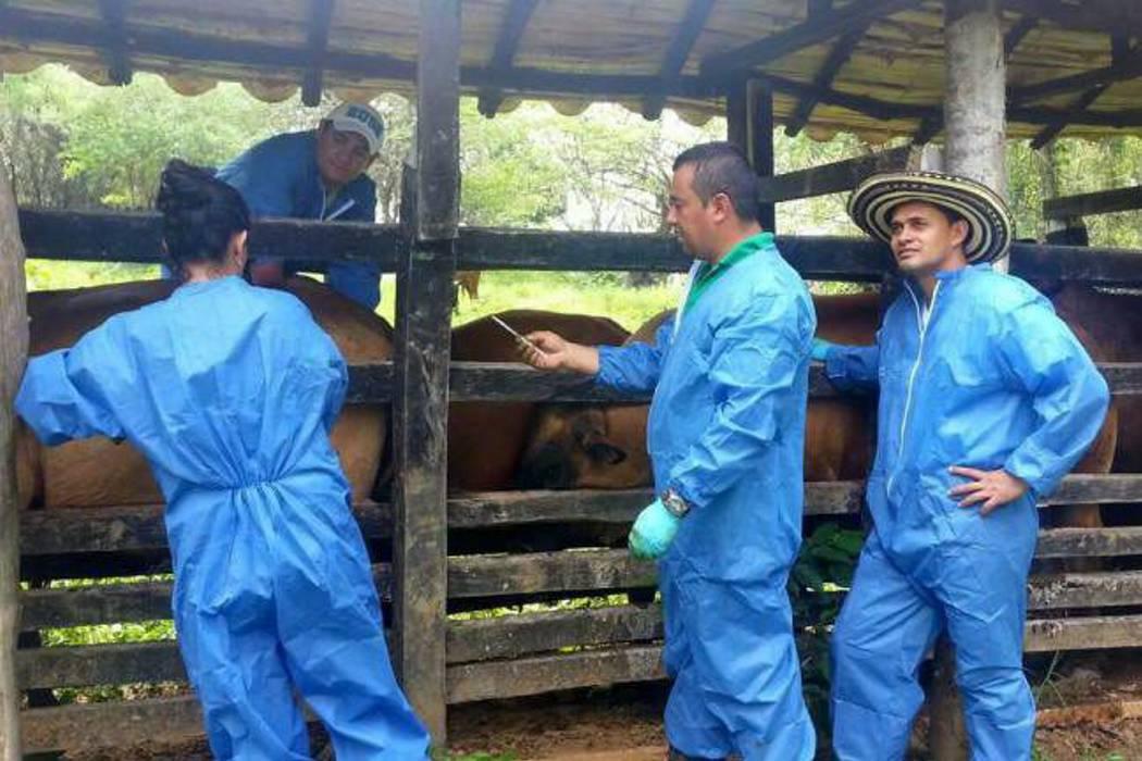 Exportaciones de carne siguen por la senda de la normalidad: Minagricultura