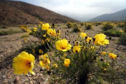 El desierto florido es sin duda una de las postales más apreciadas por los turistas.