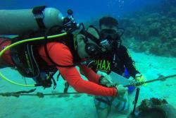 En San Andrés siembran corales para restaurar sus arrecifes