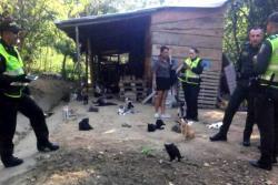 Denuncian hallazgo de cerca de 30 animales degollados en Bucaramanga