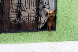 Rescatan dos perros que sobrevivieron cinco meses abandonados en vivienda de Girón