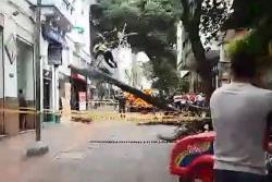 Video registró caída de un bombero junto a un árbol en el Centro de Bucaramanga