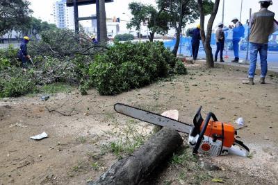 Bucaramanga se quedó sin árboles