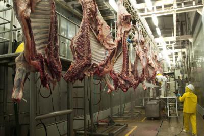 Crece 8,4% el sacrificio de ganado en Santander