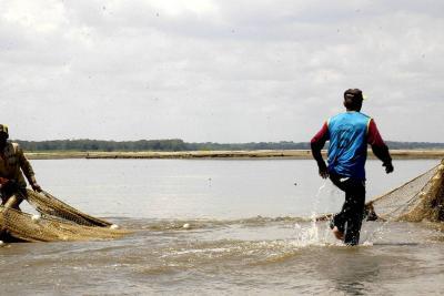 Pesca redujo un 60% por sequía del río Magdalena