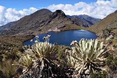 Colombia participa en la evaluación de biodiversidad y ecosistemas en Malasia