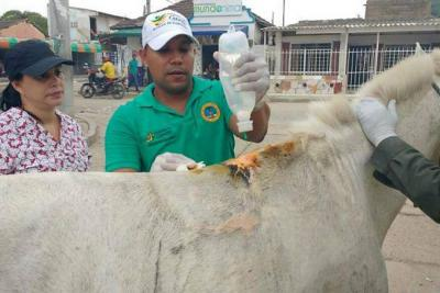 Decomisan caballo que se desplomó en Cartagena