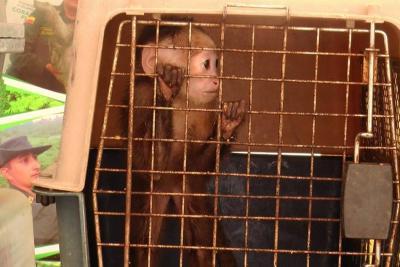 Autoridades rescataron 22 animales silvestres en Santander