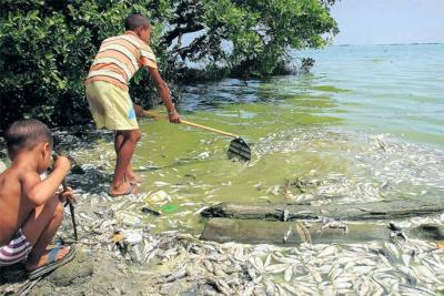 Las cinco muertes lentas de la Ciénaga Grande de Santa Marta