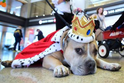 Habrá fiesta de Halloween para perros y gatos en Bucaramanga