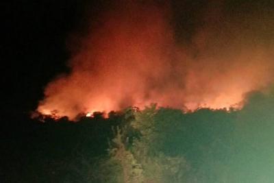 Grave incendio forestal arrasó palma de aceite en Santander