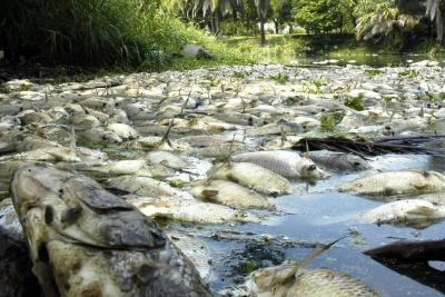 Emergencia ambiental por mortandad de peces en el río Lebrija