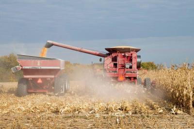Se desgranó el precio del maíz amarillo en Colombia