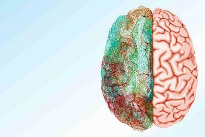 Tecnologías de imagen revelarían  las profundidades del cerebro