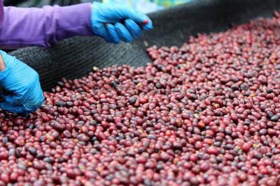 Producción colombiana de café sube 8,1 % en marzo