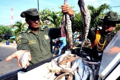 Incautan más de media tonelada de pescado en mal estado en Santander