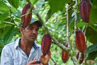 Café y cacao son las apuestas de 27 departamentos
