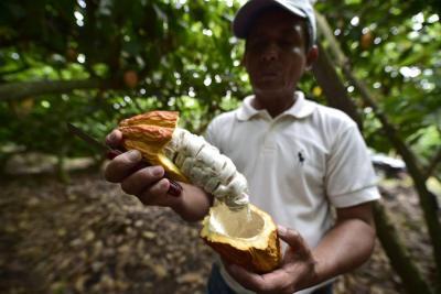 Expertos en cacao se reúnen en Bucaramanga