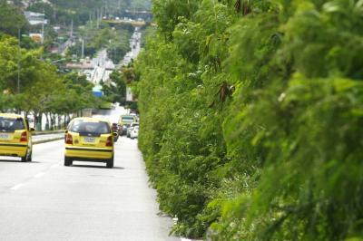 Mantenimiento de áreas verdes se programan a diario: Emaf