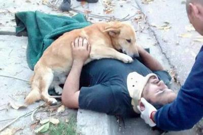 El perro que no se separó de su amo accidentado y enternece al mundo