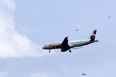 Piden acciones contra gallinazos en aeropuerto de Bucaramanga