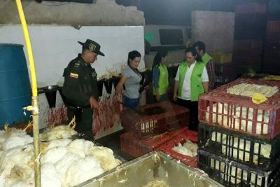 Matadero clandestino de aves fue hallado en Valle de Ruitoque