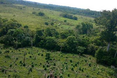 40 falsas víctimas del conflicto armado reclamaban tierras