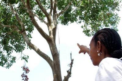 Hombre borracho subió a un árbol y murió tras sufrir caída