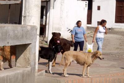 La comunidad está preocupada por los perros y gatos callejeros