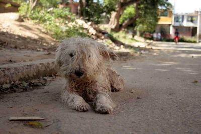 Alcaldía de Bucaramanga reconoce desatención  en asuntos de bienestar animal