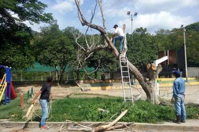 Habitantes de Girón preocupados por la reiterada tala de árboles