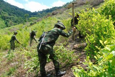 Conozca las razones por las que aumentaron los cultivos ilícitos en Colombia