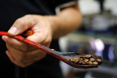 Indonesia quiere café, carne, aguacate hass y caña de azúcar
