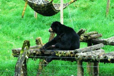 Polémico fallo ordena devolver a su hábitat a oso que está en zoológico de Barranquilla