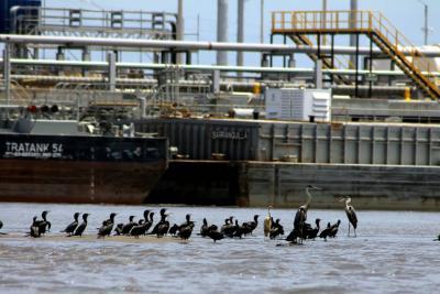 Adjudicada interventoría para el río Magdalena
