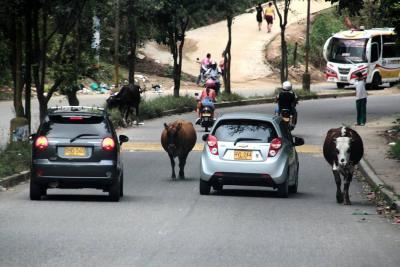Las calles de Bucaramanga no pueden seguir siendo 'establos'