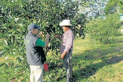 El aguacate colombiano tiene vía libre para llegar a Estados Unidos
