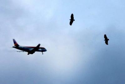 Presentarán plan contra gallinazos en Bucaramanga