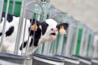 Siga en Vanguardia.com el debate sobre problemática de leche y carne en Santander