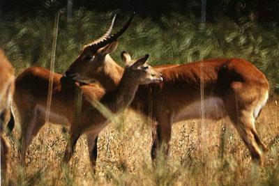 Son 25.062, las especies de animales en peligro de extinción en todo el mundo