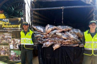 Armada decomisa 1,5 toneladas de pescado en frontera con Venezuela